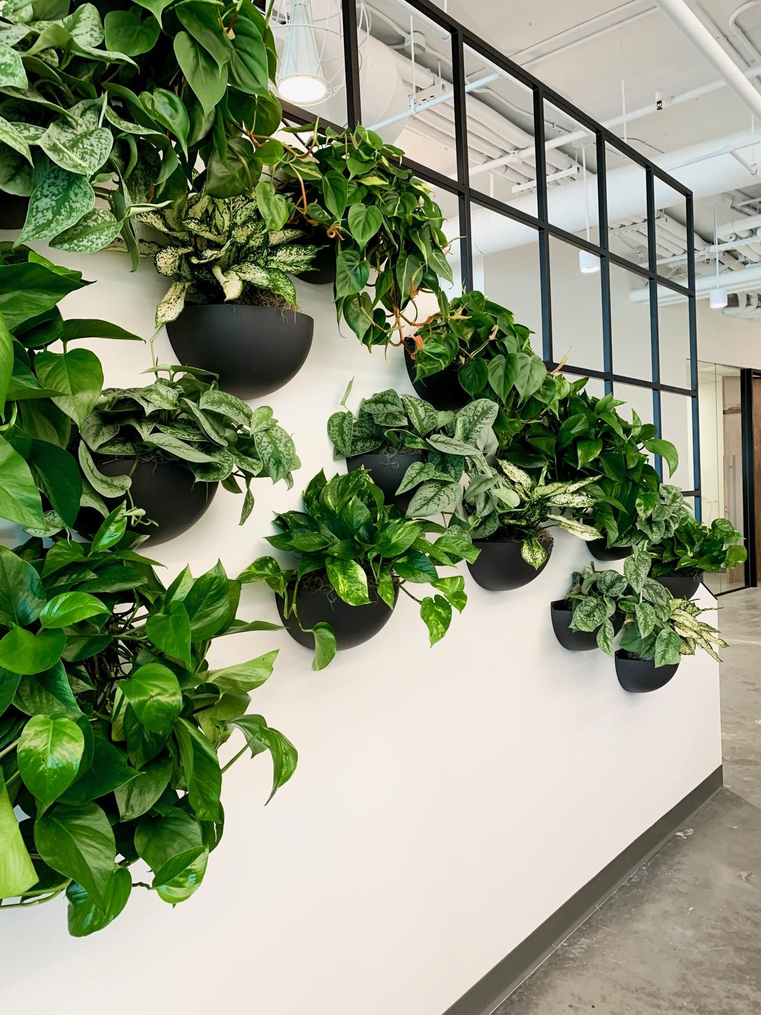 Wall Plants, hangging plants, plant sconce, wall planters, wall pots