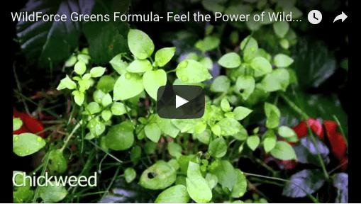 Wild Greens Formula