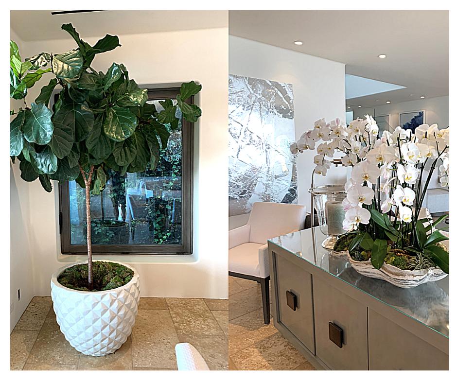 Interior plant design, Professional plant care service, interior plant service contract