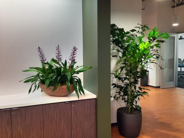 Office plants and flowers in reception area
