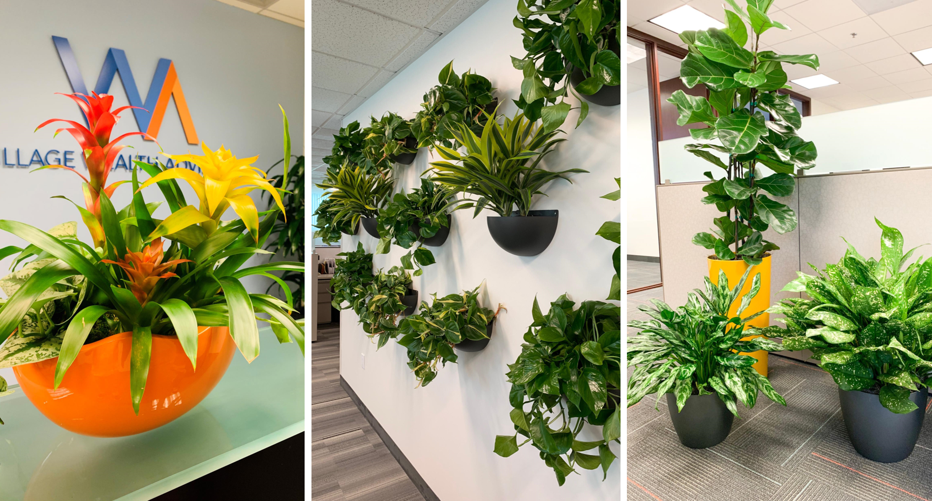 Interior office plants, plant design, plant maintenance, plant rental, office plant rental, plant lease, plant service