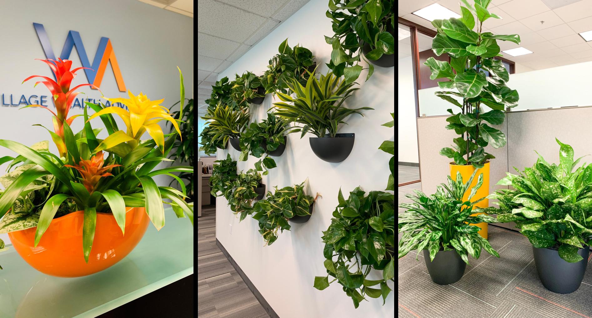 Lobby Plants, Wall Plants, Interior office plants, plant design, plant maintenance, plant rental, office plant rental, plant lease, plant service