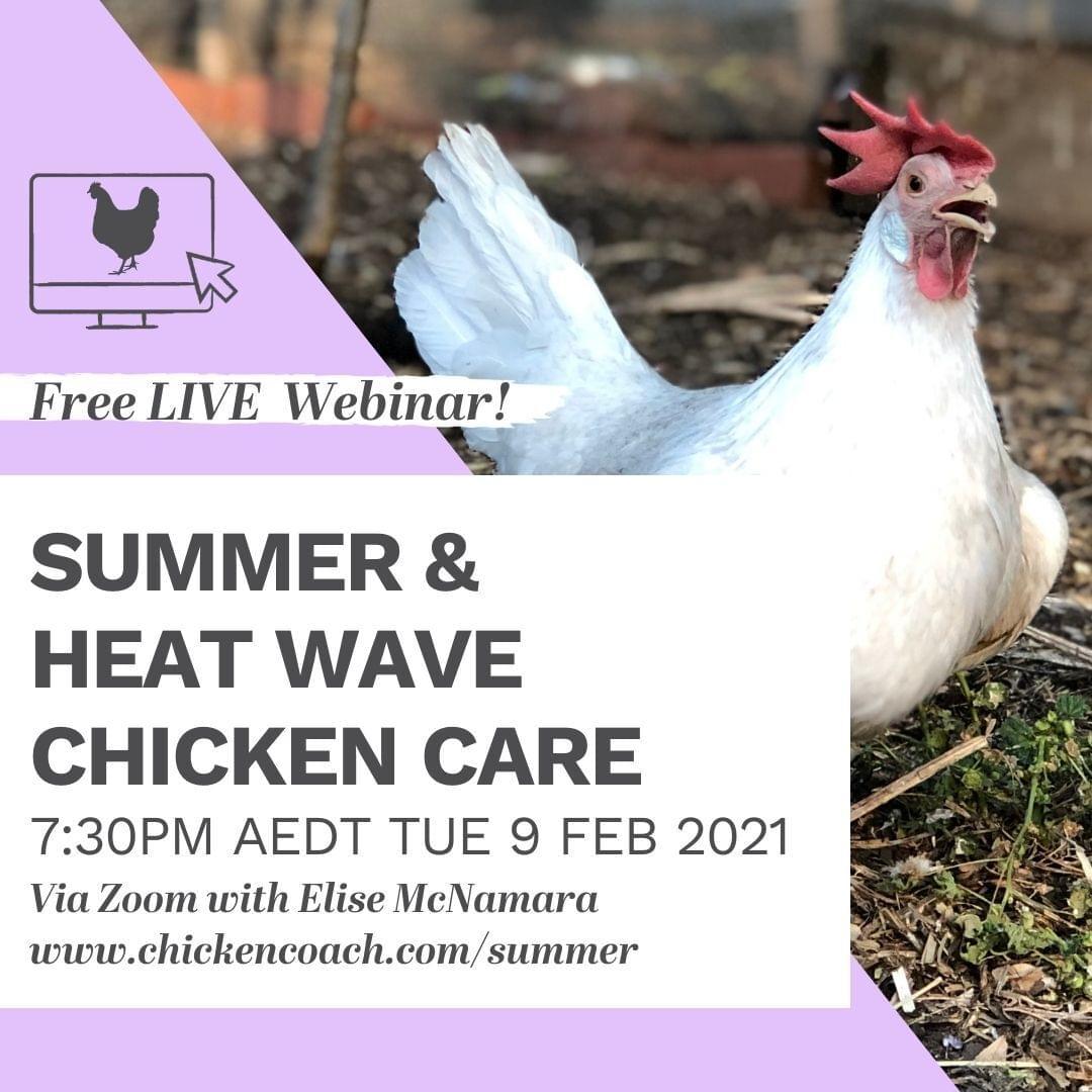 Summer chicken care free weibar