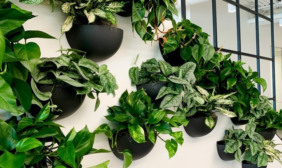 Living wall, green wall, plant wall, indoor plant design
