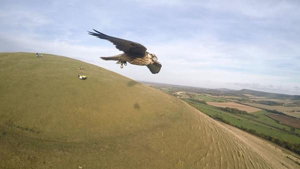 Safire Falcon in Flight from paraglider