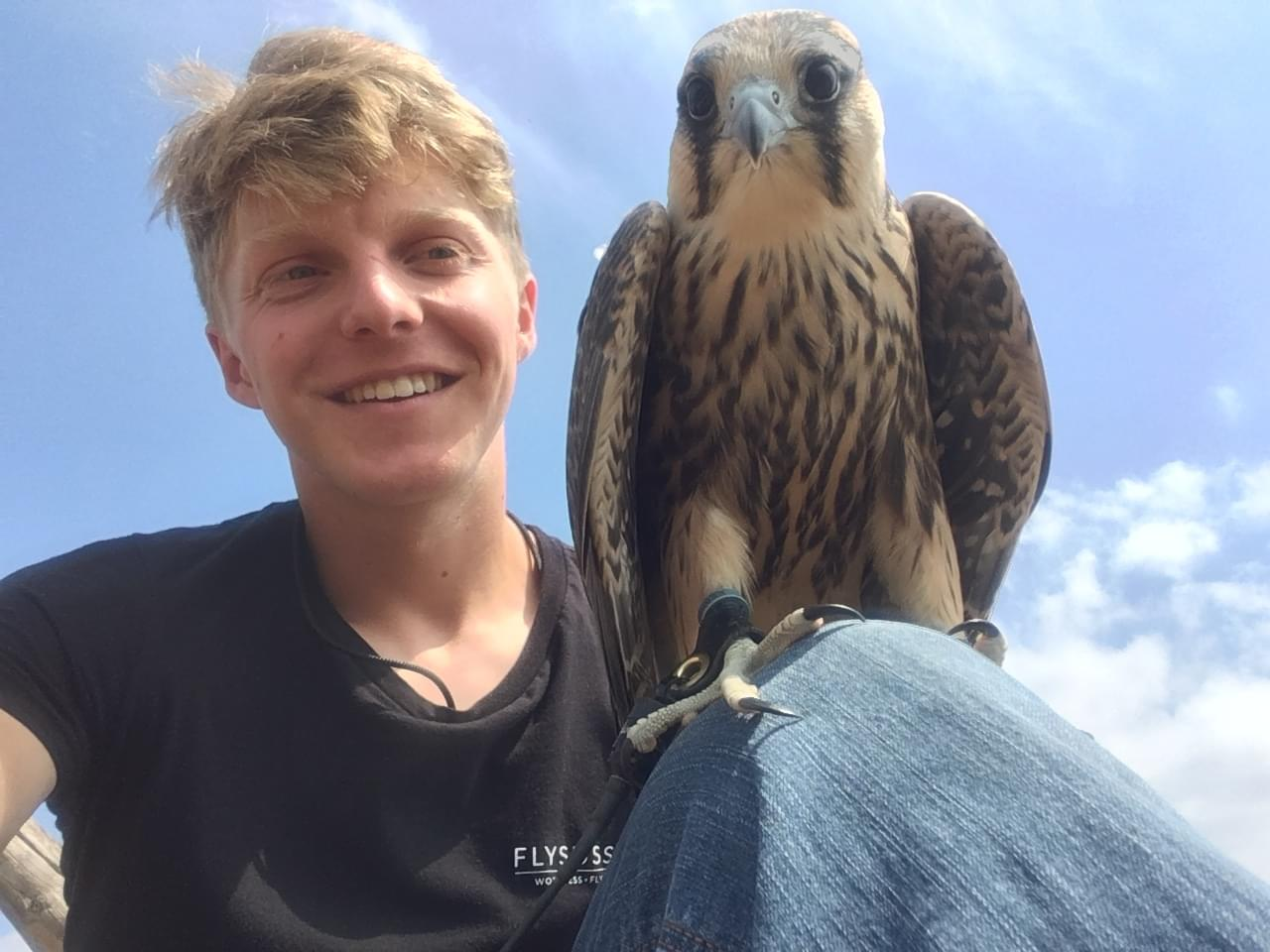 Meet safire falcon with Tiger Cox lanner falcon